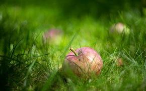 Картинка трава, макро, яблоко