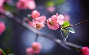 Обои цветок, листья, макро, свет, природа, блики, веточка, розовый, ветка, весна, лепестки, размытость, кольцо