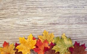Картинка дерево, colorful, wood, texture, autumn, leaves, осенние листья