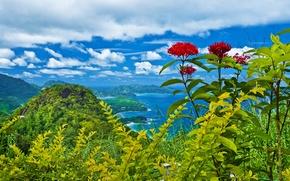 Картинка облака, деревья, пейзаж, цветы, горы, природа, кустарники