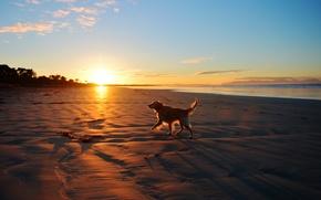 Картинка море, пейзаж, закат, друг, собака