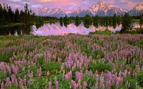 Картинка цветы, отражение, горы, деревья, полевые, поляна, озеро, розовые, закат