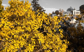 Картинка Tree, Sunset, Autumn, Stuttgart, Leaves, Houses, Dusk, Hillside
