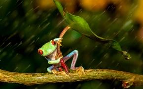 Картинка лист, дождь, лягушка, лапки, зонт, зеленая, rain, разноцветная, umbrella, frog, red eyes, beauty, orange, оранжевые …