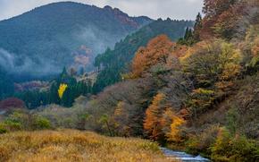 Картинка осень, лес, деревья, пейзаж, горы, ручей