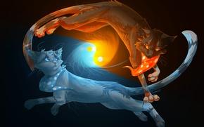 Картинка животные, вода, огонь, коты, черный фон, инь-янь