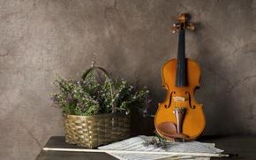 Картинка цветы, музыка, скрипка