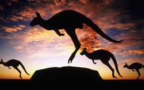 Картинка Австралия, кенгуру, сумерки