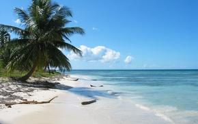 Картинка море, пальмы, Берег