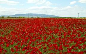 Картинка поле, небо, цветы, горы, маки