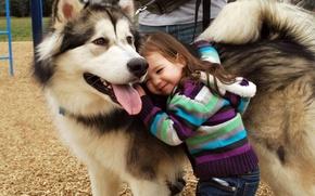 Картинка природа, дети, друг, настроения, собака, брюнетка, дружба, девочка, полосатый, свитер, любовь. улыбка