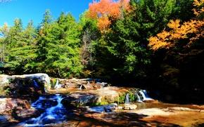 Картинка осень, лес, деревья, природа, река, colors, forest, Nature, river, trees, autumn, fall