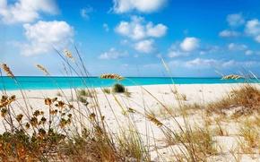 Картинка песок, море, пляж, трава, берег, Grace, beach, bay