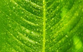 Обои прожилки, макро, лист, зеленый, капли