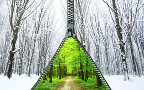 Картинка зима, лес, лето, снег, деревья, листва, молния