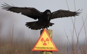 Обои табличка, ворон, чернобыль, столбик, радиационная опасность