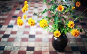 Картинка листья, цветы, желтые, ваза, оранжевые