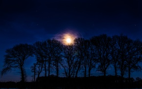 Картинка звезды, деревья, ночь, луна, силуэты