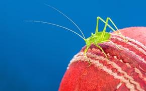 Обои red, cricket, cricket ball