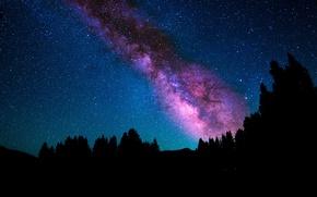 Обои небо, звезды, деревья, ночь, млечный путь
