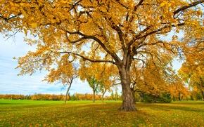 Картинка осень, трава, листья, парк, дерево