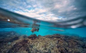 Обои облака, рифы, над водой, скалы, небо, черепаха, рыбы, под водой, сплит