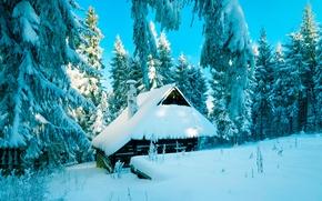 Картинка зима, лес, снег, Польша, хижина
