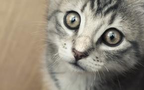 Обои глаза, усы, котенок, deviantart, i am sorry, kellebass