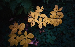 Картинка colors, leaves, garden, plants