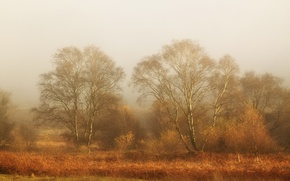 Обои туман, поле, пейзаж
