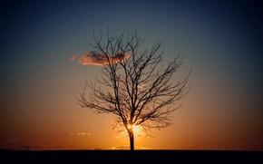 Картинка небо, солнце, дерево, вечер