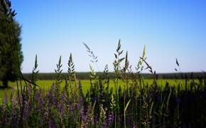 Картинка поле, лес, небо, цветы