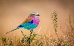 Картинка птичка, разноцветная, Flying rainbow