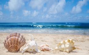 Картинка песок, море, прибой, ракушки, раковины