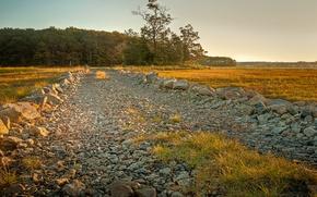 Картинка поле, природа, гравий, дорога, пейзаж, лес