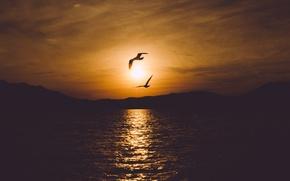 Картинка море, небо, вода, пейзаж, закат, птицы