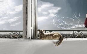 Обои вода, окно, cat, кот