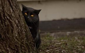 Обои дерево, кот, глаза, смотрит, черный