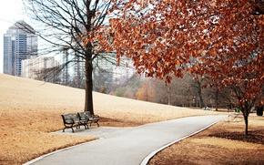 Картинка осень, трава, деревья, пейзаж, город, парк, газон, листва, вид, здания, склон, дорожка, скамейки