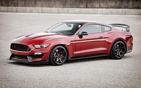 Картинка Mustang, Ford, Shelby, мустанг, форд, шелби, GT350R