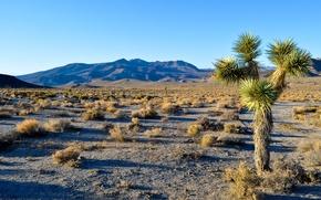 Обои joshua tree national park, калифорния, сша, горы