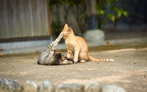 Картинка кошки, улица, игра, котята