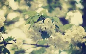 Картинка листья, цветы, ветви, нежность, красота, весна, размытость, белые, цветение, боке