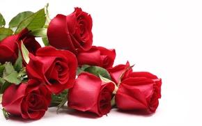 Картинка красные, Розы, 8 марта, международный женский день