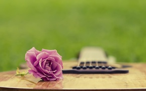 Обои лето, трава, роза, гитара, полянка
