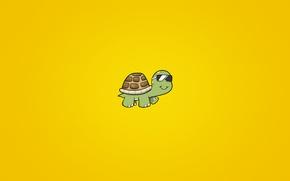 Обои животное, черепаха, очки, Панцирь, turtle, солнечный фон
