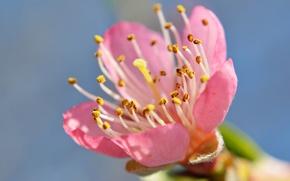 Обои тычинки, лепестки, сад, весна, небо, цветок