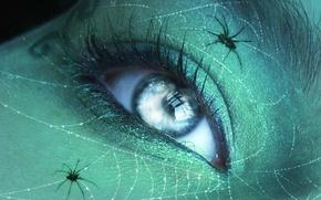 Картинка макро, сеть, пауки, паутина, Глаз