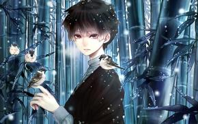 Картинка бамбук, птицы, снег, Девушка