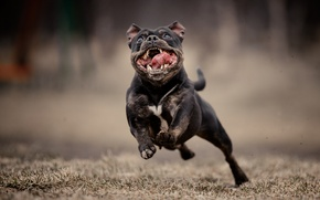 Картинка морда, фон, собака, бег